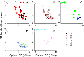 Universal Recipients Blood Designation Functional Clusters Of Neurons In Layer 6 Of Macaque V1