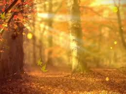 Fall Forest Background Life Scribe Media Worshiphouse Media