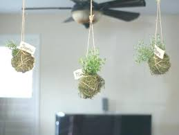 indoor herb planter hanging herb planters hanging indoor herb garden indoor hanging herb garden into reality