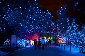 zoo lights. Wonderful Zoo Zoo Lights Preview At Denver In