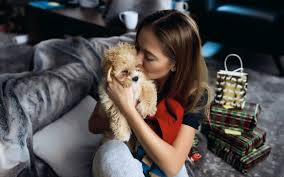 caring for maltipoo puppies