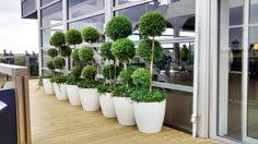 office planter boxes. Office Plants, Plant Design, Cool The Office, Acting, Your Space,  Planters, Planter Boxes, Office Planter Boxes D