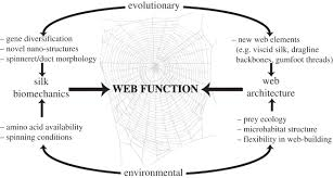 How To Make A Giant Spider Web High Performance Spider Webs Integrating Biomechanics Ecology