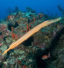 Hawaii Fish Marine Wildlife Information Maui Kauai Big