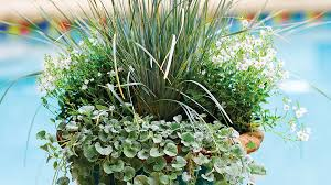 the best shade loving plants for