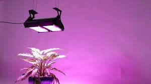 200 Watt Grow Light Indoor Plant High Intensity Full Spectrum Industrial 200 Watt Led Grow Light View 200 Watt Led Grow Light Fy Lighting Product Details From Fy