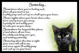 Cat Loss Quotes Inspiration Beautiful Black Cat Memorial Pet Loss Bereavement By Chaffys