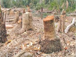 deforestation and degradation of forests essay deforestation and degradation