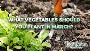 what vegetables should you plant in