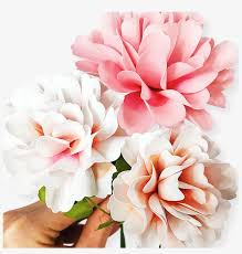 Paper Flower Templates Free Download Paper Flower Png Carnation Paper Flower Template Free