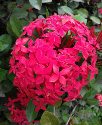 colour flower photography steemit