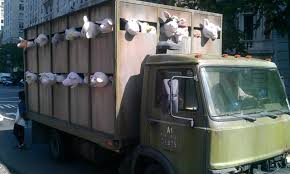 Fake farm animals truck outside the Met (Banksy?) : pics