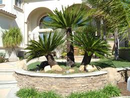 Palm Tree Decor For Bedroom Architecture Incredible Front House Landscape Design Ideas With