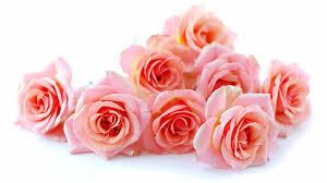 cute pink roses wallpaper 2