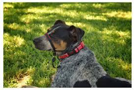 Halti Optifit No Pull Dog Collar Free Taglock With