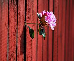 Image result for flowers growing in strange places