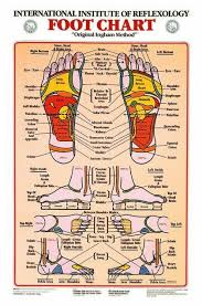 Free Printable Reflexology Charts Reflexology Ear Chart