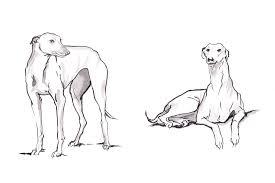 Sketches Animal Jennie Webber Animal Sketches