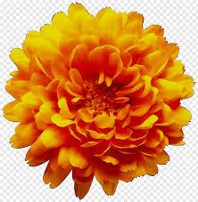 Marigold Floral Design Floral Flower Chrysanthemum Orange Yellow Blue Floral