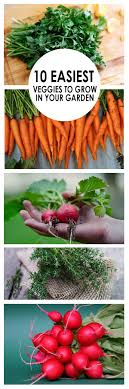 Kitchen Gardening For Beginners 17 Best Ideas About Gardening For Beginners On Pinterest