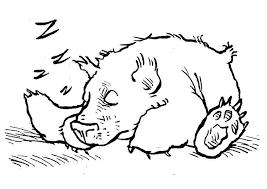 Disegno Da Colorare Orso Che Dorme Cat 7580 Images