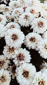 beautiful flower wallpapers for iphone