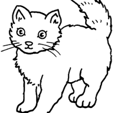 Small Picture Birman Animal Coloring Pages nebulosabarcom