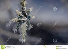 Goldener Frost Bedeckter Weihnachtsstern Der Einen Baum Im