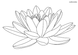 Their min testing subject was carl jung. Roses Coloring Pages Free Printable Rose Coloring Sheets