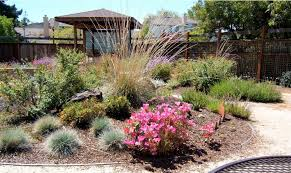 california native plants for the garden. Solutions Garden California Native Gardening Plants For The N
