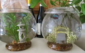 Decorative Betta Fish Bowls Green Jean cleaning fish and feeding plants 29