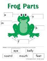 Parts Of A Frog Frog Theme Printables As Well As Frog Parts Image Pinned Here