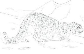 The Leopard Coloring Pages For Kids And Snow Leopard Coloring