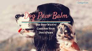 dog paw balm and snout soother