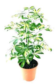 Image Natural Light Plants That Need No Light Best Desk Plants Office That Require No Sunlight Large To Do Neginegolestan Plants That Need No Light Best Desk Plants Office That Require No