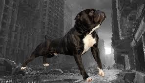 black bulldog