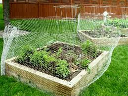 Using Basic Chicken Wire On A Backyard Coop Yard Landscaping Ideas