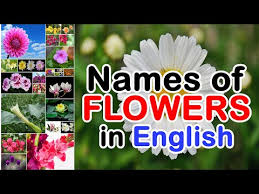 Ingles Floral Names Of Flowers In English Types Of Flowers Youtube