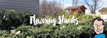 04flowering shrubs