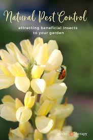 natural pest control attracting beneficial insects to your garden