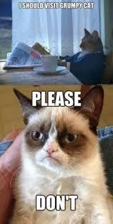 Cats on Pinterest | Grumpy Cat, Kitty and Grumpy Kitty via Relatably.com