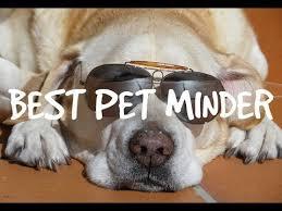 Best Pet Minder Video At My Desk Youtube