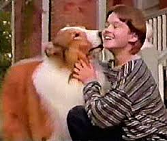 Image result for images of the new lassie