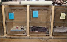indoor outdoor dog kennel building designs ideas inside