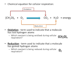 what is the chemical equation for cellular respiration identifying