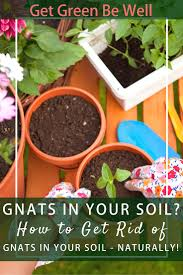 Small Gnats In Kitchen Miracle Gro Potting Soil And Fungus Gnat Infestations Get Green