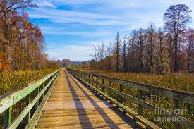Phinizy Boardwalk in Autumn Photograph by Gregory Schultz