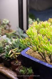 Succulent Grow Light Setup Choosing The Right Grow Light Do You Need A Grow Light