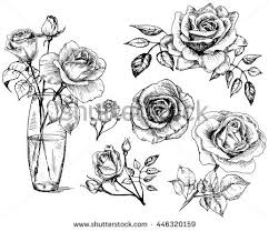 Small Picture Rose Drawing Stock Images Royalty Free Images Vectors