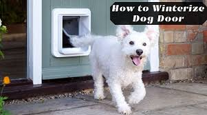 how to winterize dog door seal your